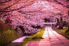 jardines japoneses cerezos - Buscar con Google