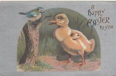 A Happy Easter To You Duckling Talking w Bird  Silver Vintage Postcard c 1909 …http://high-class-last-minute-offer.newoffers.info/buy/01/?query=161835286563…