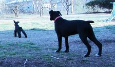 Double Guard Duty!   Cherry and Ruby March 14, 2015