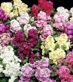 Top 10 Wonderful Flowers That Bloom All Year Long - Top Inspired Plants, Summer Blooming Flowers, Front Garden Landscape, Planting Flowers, Wonderful Flowers, Flowers, Bloom, Perennials, Flower Garden