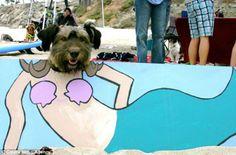 Comenzamos viaje en 3, 2, 1....    Viajá con Avantrip!  #Avantrip #Viajar #Viaje #Animales #Animal #Animaladas #Viajeros #Travel #Mundo #Naturaleza #Conocer #Vintage #Perro #Dog #Dogs #Perros #Playa #Beach
