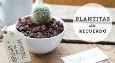 Cactus en tazas como recuerdo para una reunión