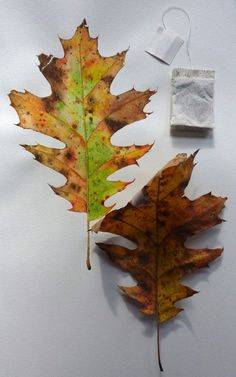 Annual Fall Leaf Painting Tutorial (2013).