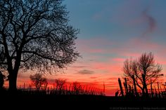 Sunset in the Vineyards above Müllheim, south west Germany.  Die Sonne geht unter im Rebland oberhalb Müllheim