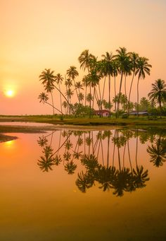 💙💖💛💙💖💛 BEAUTIFUL sunset sun water palms reflection mirror