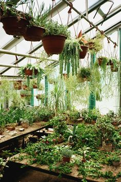 A greenhouse keeps things fresh & lovely, no matter the season! Green plants in a greenhouse with a glass roof. Greenhouse Plans, Greenhouse Gardening, Simple Greenhouse, Large Greenhouse, Hanging Plants, Indoor Plants, What Is A Conservatory, Room With Plants, Plant Decor
