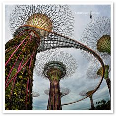 GARDENS BY THE BAY-SUPER TREES: Supertrees are tree-like structures that dominate the Gardens landscape with heights that range between 25 and 50 metres. They are vertical gardens that perform a multitude of functions, which include planting, shading and working as environmental engines for the gardens.