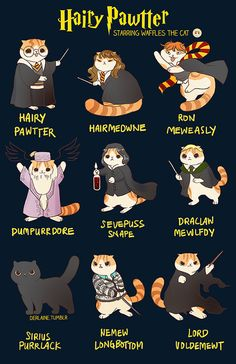 Waffles the Cat: Harry Potter
