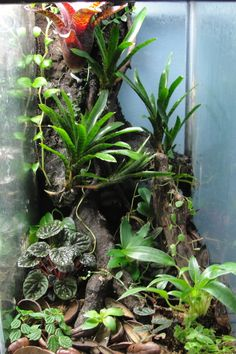 So after having this spare aquarium sitting around for a couple of months, I finally decided to make use of it. This is my first vertical vivarium Gecko Terrarium, Orchid Terrarium, Aquarium Terrarium, Planted Aquarium, Gecko Habitat, Reptile Habitat, Reptile Room, Reptile Cage, Tarantula Enclosure