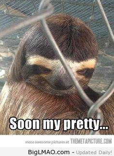 Creepy Sloth strikes again…