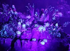 UV fed flowers on Kit and Caboodle's bespoke rock facia stage set. Riccardo Tisci's 2016 launch for Nike Lab Neon Jungle, Stage Set, Bespoke, Lab, Product Launch, Rock, Nike, Flowers, Taylormade