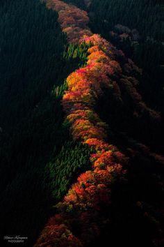 東京カメラ部 Popular:Rikizo Kitagawa #AutumnLeaves