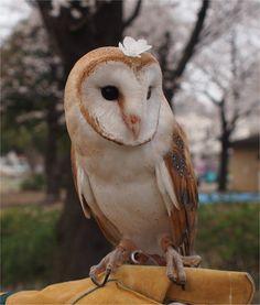 A very beautiful girl Mundo Animal, My Animal, Owl Bird, Pet Birds, Animals And Pets, Baby Animals, Beautiful Owl, Cute Animal Pictures, Owl Pictures