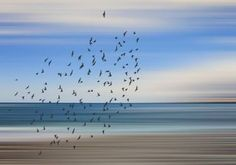 Seascape and Birds - Limited Edition 1 of 20 Photograph Abstract Photography, Color Photography, Digital Photography, Buy Art, Paper Art, Saatchi Art, Original Art, Abstract Art, Art Deco