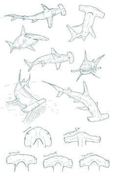 Draw Sharks edemoss: Hammerhead sketches I did for a piece about…hammerheads. I could twenty pages of shark sketches. - edemoss: Hammerhead sketches I did for a piece. Animal Sketches, Animal Drawings, Drawing Sketches, Art Drawings, Drawings Of Sharks, Sketching, Hammerhead Shark Tattoo, Hai Tattoos, Drawing Tips