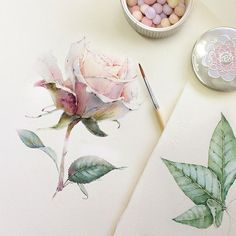 Flowers sketchbook by Katerina Pytina on Behance. Watercolor rose