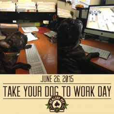 June 26 Take your Dog to Work Day - Healthy Pet in Austin, TX
