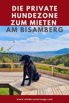 Am Bisamberg in Niederösterreich kann man sich eine private Hundezone mieten - mit WIEN BLICK. Europe Travel Guide, German, Board, Europe, Travel Inspiration, Travel Alone, Travel Report, Deutsch, German Language