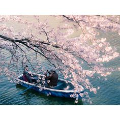21 Of The Most Beautiful Japanese Cherry Blossom Photos Of 2014 ❤ liked on Polyvore featuring backgrounds, pictures, art, deco and filler