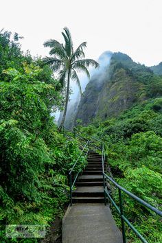 The must visit lush, tropical Iao Valley. If you wish for a tropical experience without a hefty drive, this is your spot! Includes tips and beautiful…