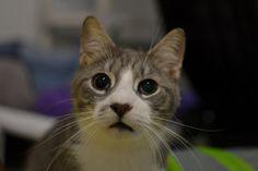Blind Cat Rescue - Wifi