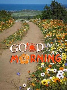 Good Morning Texts, Good Morning Friends, Good Morning Greetings, Good Morning Inspirational Quotes, Good Morning Quotes, Good Morning Beautiful Images, Sunflower Wallpaper, Good Morning Flowers, Faith In Love