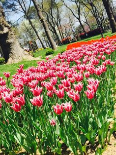 Spring and tulips Tulips, Spring, Plants, Beautiful, Tulip, Planters, Plant, Planting