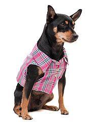 CAMISA  SUMMER PINK PET  SHIRT SUMMER FOR PET  #cacaudresspet cacau-dress-pet-roupa-pets-cachorro-gatos-camisas-pet-nova-petrópolis-rio-grande-do-sul-animais-de-estimação-comprar