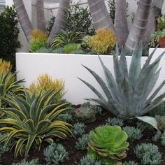 Create a drought-friendly xeriscape landscape. (Originally featured on a California-Friendly Landscape Contest hosted by Roger's Gardens in Orange County, CA) Succulent Landscaping, Tropical Landscaping, Landscaping Plants, Succulents Garden, California Front Yard Landscaping Ideas, Landscaping Jobs, Landscaping Software, Arizona Landscaping, Luxury Landscaping