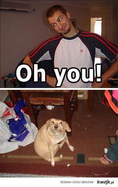 ahhaaha! the dog's eyes!