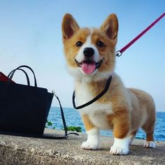 cute puppy!(3)