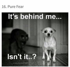 Katter er hundens beste ... Nei, det var helt feil 😂 Frihetens arv, www.frihetensarv.no, Katt, Morsom katt, Søt katt, Hund, Hundetrening, Morsom hund, Hund og katt, Kjæledyr, Søt hud, Vakker hund, Valp, Kattunge, Lek, Quotes