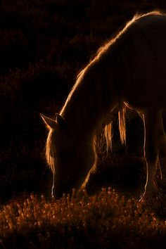 .  (via 500px / Sunlit horse by Derek Watt)