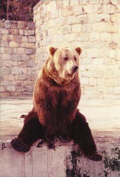 chin up, bear.
