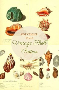 A fabulous collection of free shell posters from 3 different sources. This beautiful vintage sea shell illustrations would look fabulous in any home. Nautical Theme Decor, Coastal Decor, Oyster Shells, Sea Shells, Seashell Identification, Paper Wall Art, Picture Boxes, Nautilus Shell, Artist Sketchbook