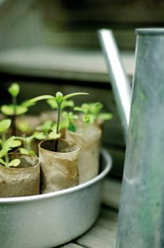 I plant lots of seeds into toilet paper rolls. They are great for sweet peas as they give the roots plenty of space to grow. Then plant the whole thing. The paper protects fragile plants and adds mulch!