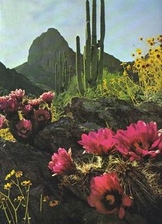 Arizona Highways 1978...how weird, we cut and pasted this picture on our family collage for Strong Bonds last year :-O