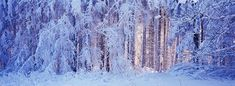 Snowy Forest Photograph by Ulrich Kunst And Bettina Scheidulin
