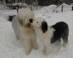 Hector ja Zigi
