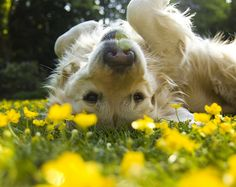 Rolling in the flowers!