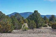 7525 N Pine St, Williams, AZ 86046. 0 bed, 0 bath, $100,000. Great horse property...