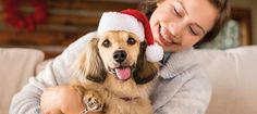 Dog Holiday Gifts: 9 Gifts Your Dog Wants | PetSmart