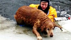 Firefighter rescues dog from icy pond - Animal Tracks