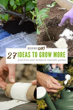 Incomparable Vegetable Gardening Tips At Your Backyard Ideas. Impressive Vegetable Gardening Tips At Your Backyard Ideas. Planting Vegetables, Organic Vegetables, Backyard Vegetable Gardens, Garden Plants, Potted Plants, Garden Art, Low Maintenance Garden Design, Growing Tomatoes In Containers, Garden Projects