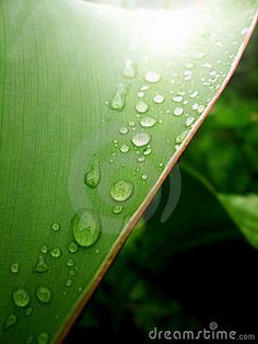 Leaf with raindrops in the forest