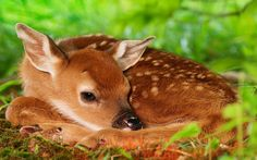 Lovely wild sika deer photography wallpaper 8 Wallpapers