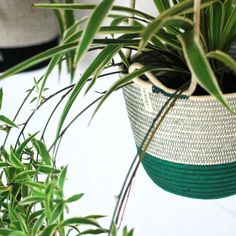 Add some greenery to your home with these unique hanging planters! Our hanging planters are available in three different sizes. To adjust the heights, just tie as many knots as needed.  Mia Mélange planters are made from 100% cotton rope which we carefully sew together in a coiling technique. The cotton is grown locally in South Africa by farmers who are members of the Better Cotton Initiate (BCI). Cotton Rope, Hanging Planters, Farmers, In The Heights, Greenery, South Africa, Knots, Sew, Unique