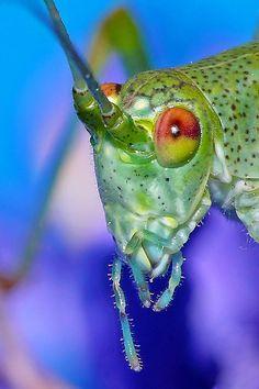 Grasshopper/Fish bait/ The Bane of my Garden !!!