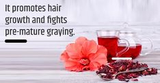 Hibiscus African herbs for hair growth also prevents pre-mature graying Henna For Hair Growth, Ginger Hair Growth, Henna Natural Hair, Thick Natural Hair, Hair Growth Oil, Natural Hair Growth, Natural Hair Styles, African Herbs, Herbs For Hair