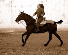 Horse at the Albox Fiesta, Almeria, Spain